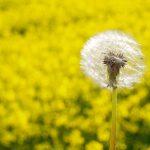 Vaistai nuo alergijos